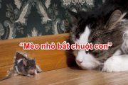 Mèo nhỏ bắt chuột con
