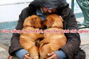 Con chẳng chê cha khó, chó chẳng chê chủ nghèo